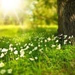 Sun Spring-276014